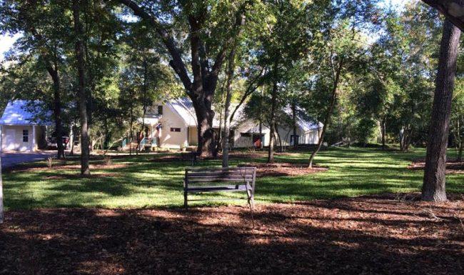Bench in shady lawn